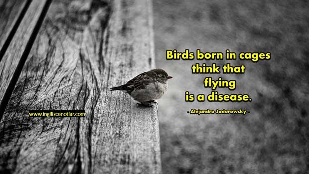 Alejandro-Jodorowsky-Kafeste-doğan-kuşlar-uçmayı